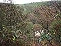 Late flowering honeysuckle - geograph.org.uk - 70273.jpg