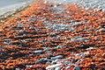 Lava-algae.jpg