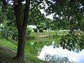 Les étangs de la THUR - panoramio.jpg