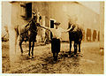 Lewis Hine, Edgar Kitchen, 13 years, drives dairy wagon from 7 a.m. to noon, Bowling Green, Kentucky, 1916.jpg