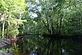 Little pee dee river 2139.JPG