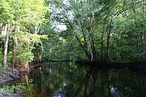 Little Pee Dee River - Little Pee Dee River at Dillon, South Carolina