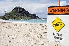 Plage avec un panneau « warning. Shark sighted. Keep out » et le logo d'un requin.