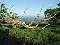 Llwyn Celyn Forestry Walk - geograph.org.uk - 437268.jpg