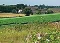 Lodge Farm near Worthington, Leicestershire - geograph.org.uk - 916914.jpg