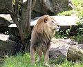 Loewe Tierpark Hellabrunn-6.jpg