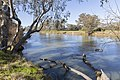 Looking downstream of the Murray River on Gateway Island.jpg