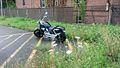 Luty Honda Magna 2.jpg