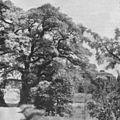 Lyells ek 1924.jpg