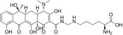 Lymecycline structure.png