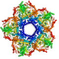 Lysine decarboxylase.png