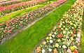 M^m Flores en el parque en la Haya - Creative Commons by gnuckx - panoramio (9).jpg