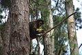 Macaco-prego Manduri 151207 4.JPG