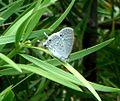 Madagascar i.d.help please - Flickr - gailhampshire.jpg