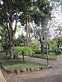 Madeira em Abril de 2011 IMG 1711 (5663172505).jpg