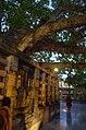 Mahabodhi Temple Complex, Bodhgaya (8716405139).jpg