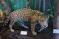 Maison Franconie jaguar.JPG