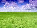 Malaysian paddy.jpg