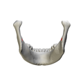 Mandibular foramen - close up - posterior view.png