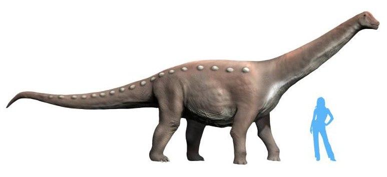 Mansourasaurus NT