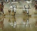 Maramadi Festival.jpg