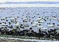Mariager fjord vinter.jpg