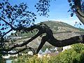 Maschuk - der Berg mit Geschichte.JPG