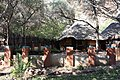 Mashovhela Bush Lodge, Louis Trichardt, Limpopo, South Africa (10185757296).jpg