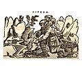 Mattioli 1559 a.jpg
