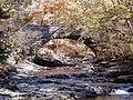 McCormicks Creek CCC Bridge PA240005.jpg