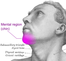 Mental region (chin).png