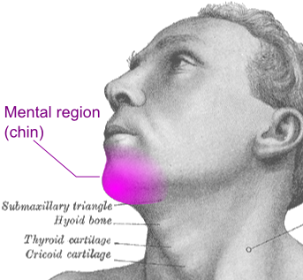 Mental region (chin)