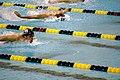 Michael Phelps in the 400 IM (2272455564).jpg