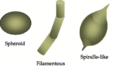 Microfossil Morphologies-1.png