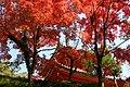 Mitaki-dera Taho-to.jpg