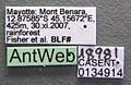 Monomorium termitobium casent0134914 label 1.jpg