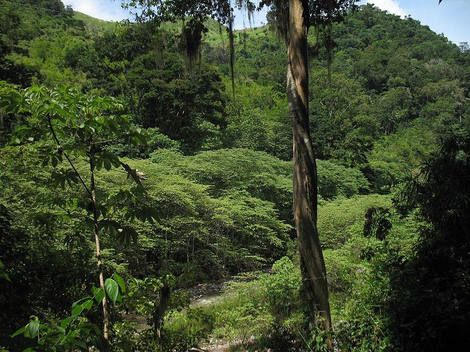 MontanasdelaSierradeAgalta Honduras