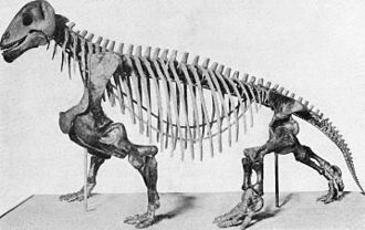 Moschops - Mounted skeleton