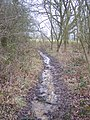 Muddy path in Damper's Wood - geograph.org.uk - 1703078.jpg