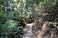 Muir Woods National Monument 2010 17.JPG
