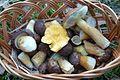 Mushrooms of Puszcza Zielonka (Trzaskowo) (6).JPG
