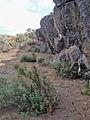 My Public Lands Roadtrip- Rimrock Draw Rockshelter in Oregon (19214008691).jpg