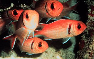 Beryciformes order of fishes