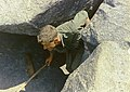 NARA 111-CCV-571-CC44328 4th Infantry Division soldier searching cave Quang Ngai 1967.jpg