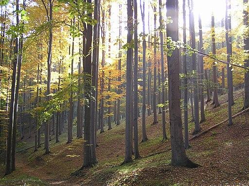 NPR Karlovské bučiny (Nationalpark Karlswalder Buchenwälder)