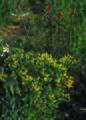 NRCSCO01024 - Colorado (1439)(NRCS Photo Gallery).jpg