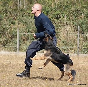 NZ Police Dog