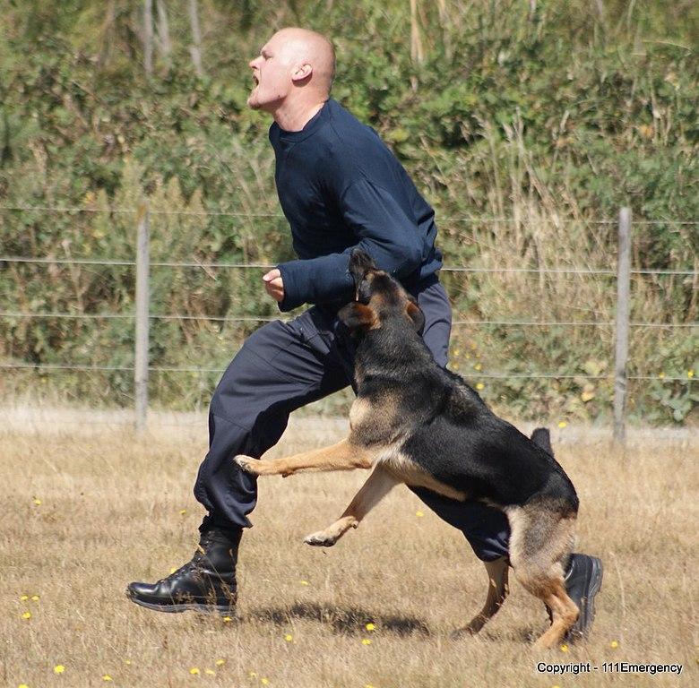Texas Dog Bite Statute Of Limitations