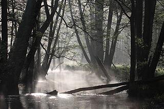 Nad rzeką Pasłęką