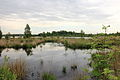 Nationaal Park Drents-Friese Wold. Locatie Fochteloërveen 01.JPG